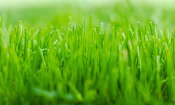 Lawn Service in Troy NY Lawn Care in Troy NY Lawn Mowing in Troy NY Lawn Professionals in Troy NY