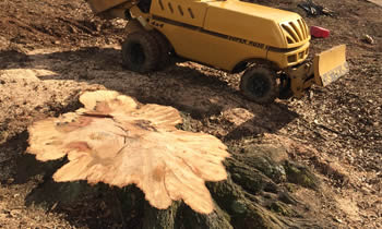 Stump Removal in Troy NY Stump Removal Services in Troy NY Stump Removal Professionals Troy NY Tree Services in Troy NY