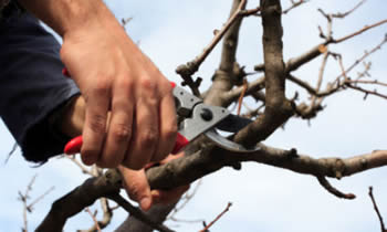 Tree Pruning in Troy NY Tree Pruning Services in Troy NY Quality Tree Pruning in Troy NY