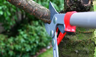 Tree Pruning Services in Troy NY