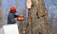 Tree Removal in Troy NY